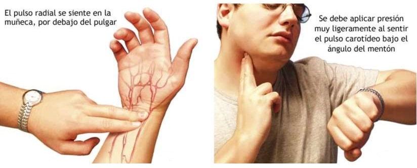 control del pulso en muñeca y cuello