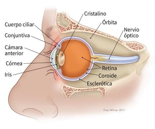 Cuerpos extraños en el ojo: tratamiento y Prevención 1